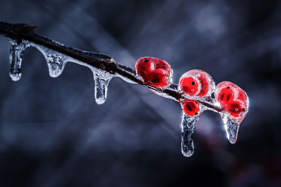 Nine-Berries-960x640.jpg